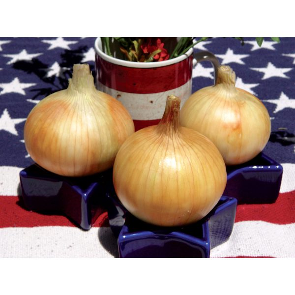 Timon F1 Hybrid Short Day Yellow Grano Onion