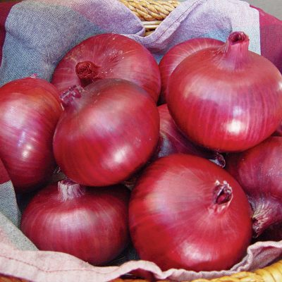 Chianti F1 Hybrid Red Onion