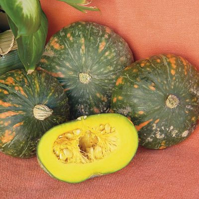 Speckled Pup F1 Hybrid Kabocha Winter Squash