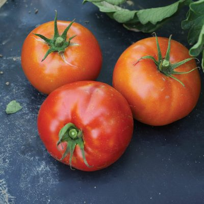 Red BLT F1 Hybrid Semi-Determinate Tomato
