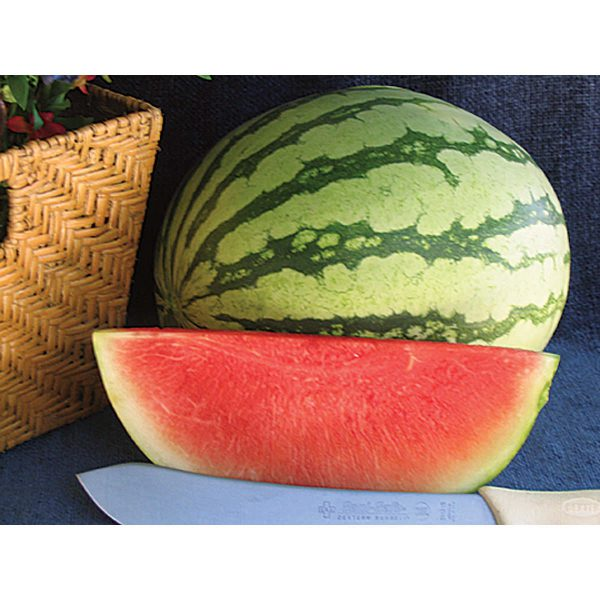Pee Dee Sweet F1 Triploid Seedless Watermelon