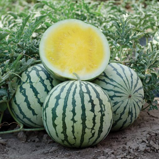 Lemon Ice F1 Hybrid Seedless Yellow Flesh Watermelon