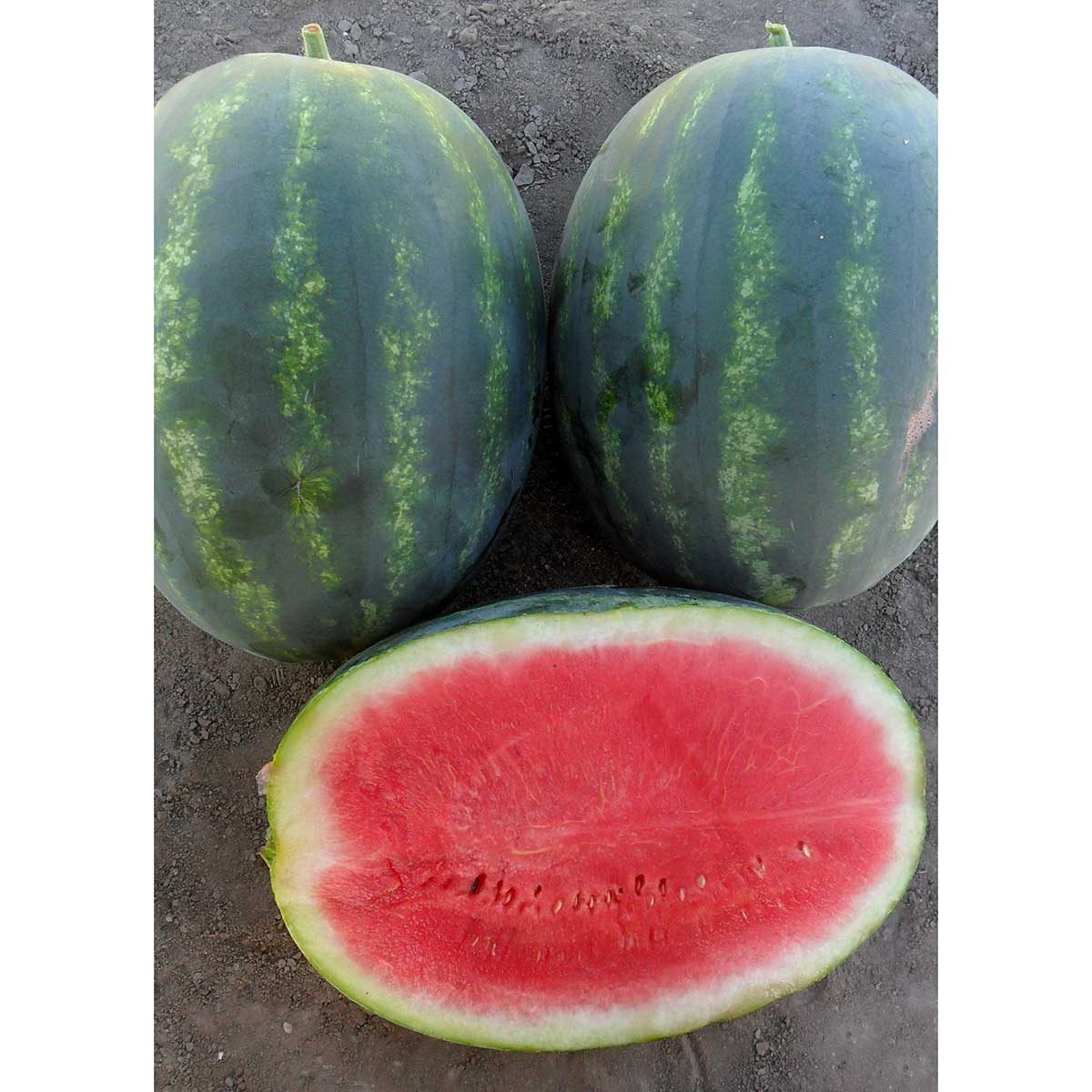 The Best & Biggest Non-Hybrid Watermelons