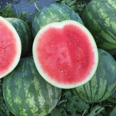 Li'l Red Rock Improved F1 Triploid Seedless Watermelon